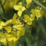 Concilier agriculture raisonnée et agroécologie