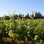 La solution Vintel® accompagne les appellations Coteaux Varois en Provence et Côtes de Provence dans leurs dérogations d'irrigation