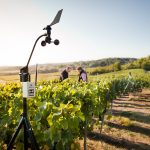 With five-day weather forecasting, Vintel now offers more accurate vineyard management