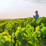 """Itk partners with Ranch Systems in the US to improve """"real-time"""" irrigation forecasts in Vintel"""
